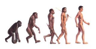 2類人猿画像.jpg